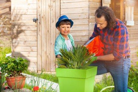 Уход за растениями в кашпо