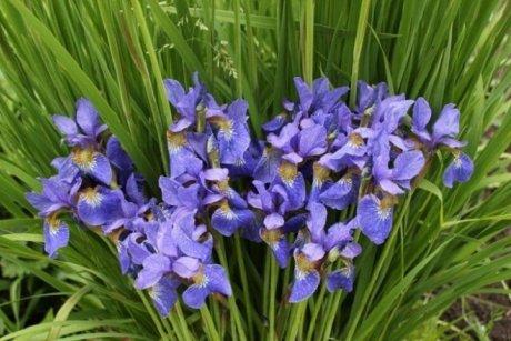 что цветет в мае