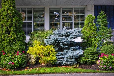 Голубая ель и другие растения под окном