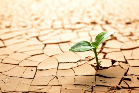 Росток взошел на глинистой почве