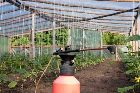 Обработка огурцов в теплице