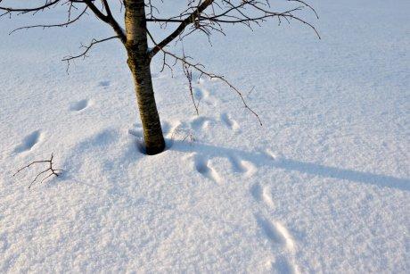 Снег под деревьями