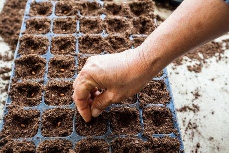 сеять семена арбуза