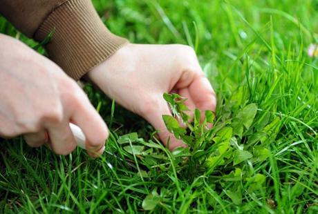 С сорняками можно справиться и вручную