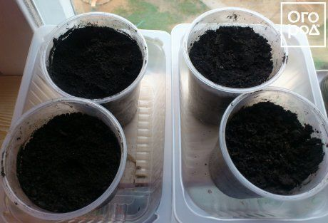 Посев семян арбузов на рассаду