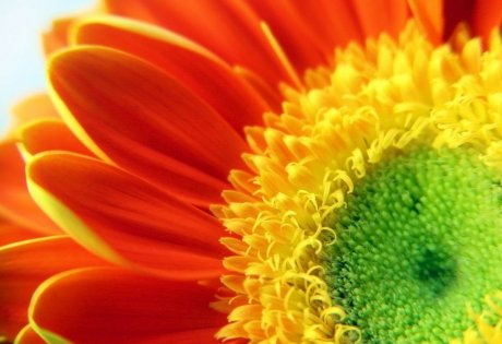 как красиво и правильно снимать цветы