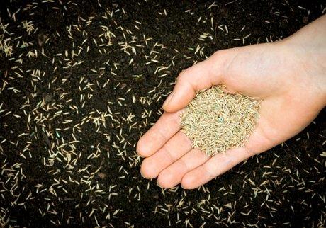 посев семян газона осенью