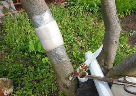 защитные пояса на деревьях