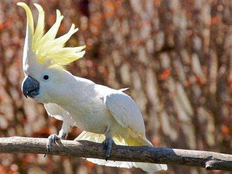 говорящие попугаи какаду