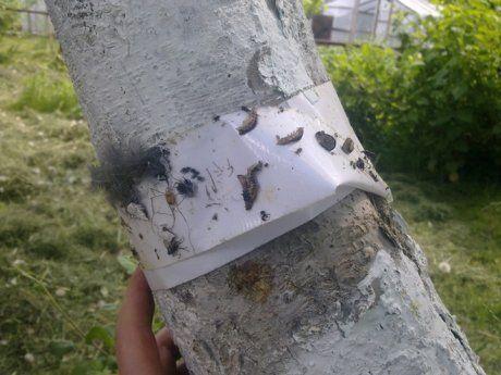 пояс от насекомых