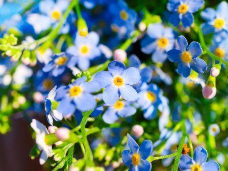 Какие цветы можно сажать в мае? - ответы экспертов