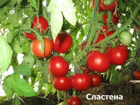 самые сладкие томаты для теплицы форум