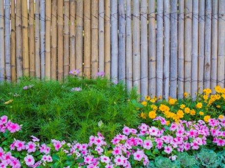 Цветы у забора