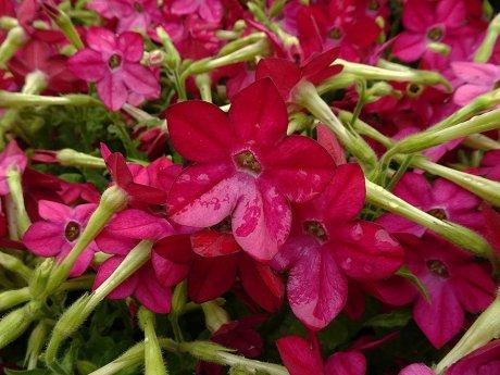 ночные цветы фото название