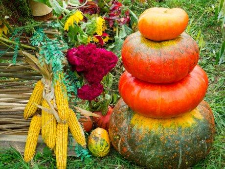 дела в огороде в октябре