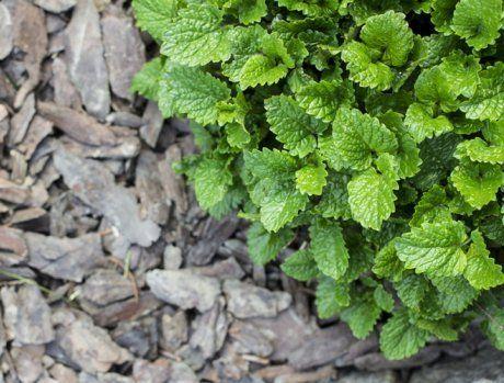 Мульча из коры защитит от сорняков, но может закислить почву