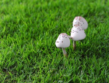 грибы на газоне