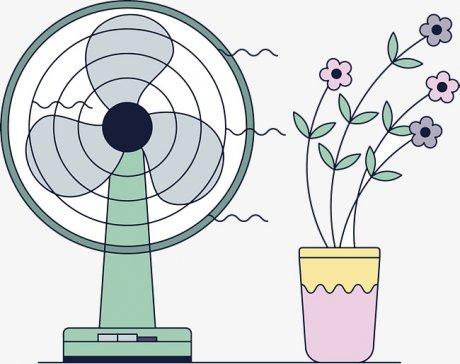 Влияние сквозняков на комнатные растения
