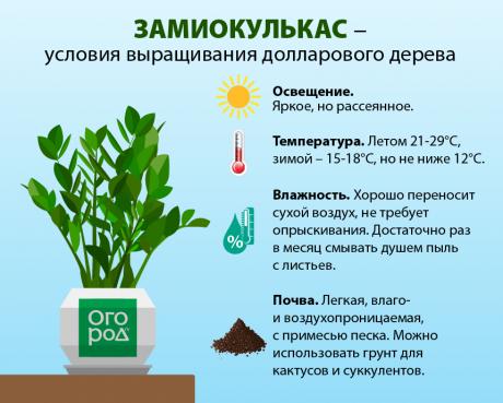 Условия выращивания замиокулькаса