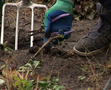 подрезаем стебли садовыми ножницами