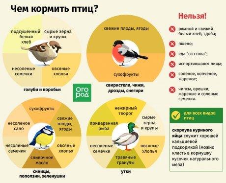 Чем кормить птиц зимой – не навреди! | Полезно (Огород.ru)