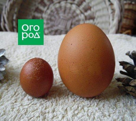 яйца большое и маленькое