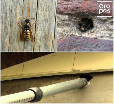 Как избавиться от ос в стене дома