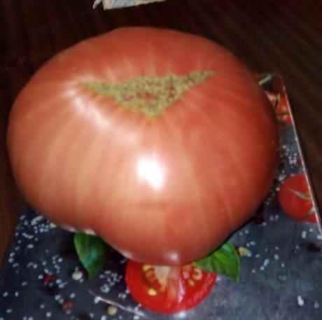 сорт томата минусинский