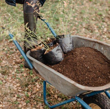 почва для голубики