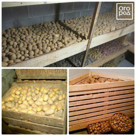 как сохранить картофель на посадку в квартире