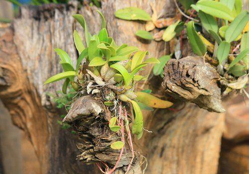 Орхидеи в тропиках