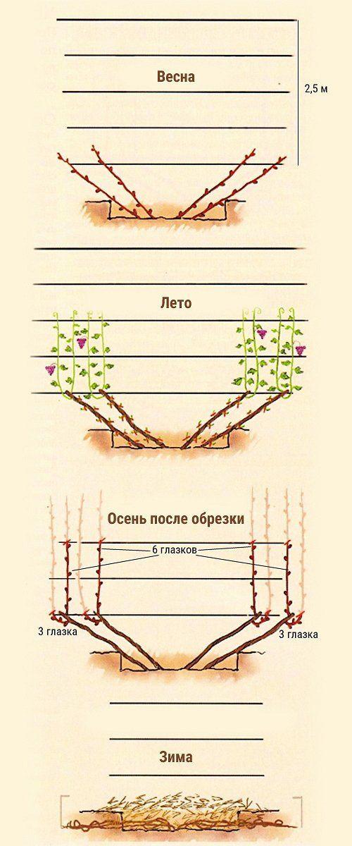 Третий год вегетации