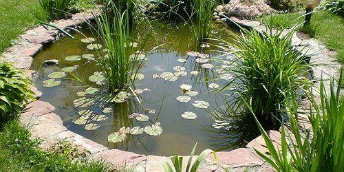 Декоративное болото на участке