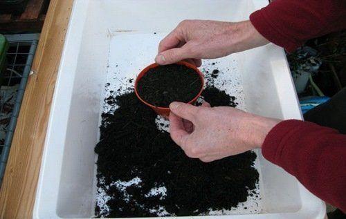 Смесь из грунта и компоста