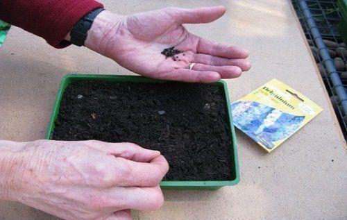 Высаживаем семена