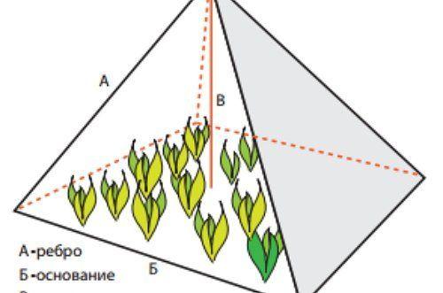 Пирамиды для огурцов своими руками