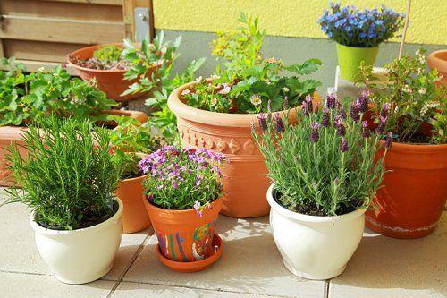 Горшечный сад из трав