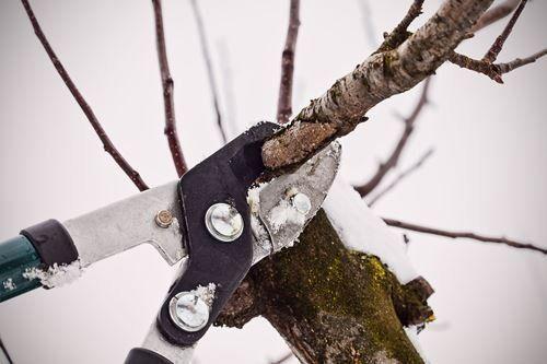 Зимняя обрезка дерева