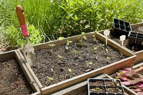 Ящик для рассады капусты