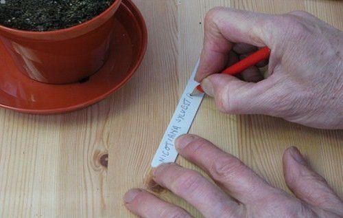 Ярлык с сортом растения