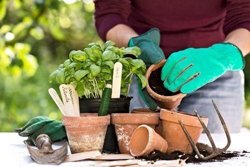 Ярлыки для растений
