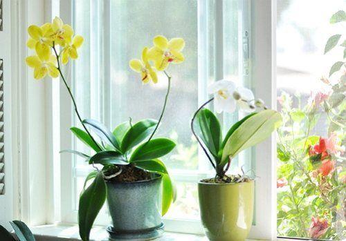 Орхидеи принимают солнечные ванны