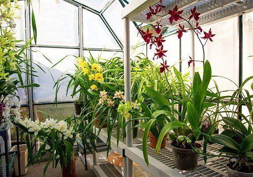 Орхидеи в магазине