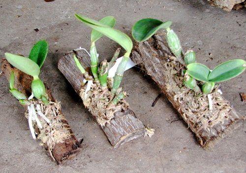 Орхидеи на блоках