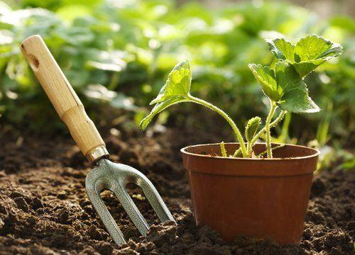 Как получить высокий урожай клубники, Садовод (Усадьба)