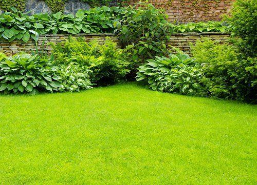 Обрамление газона растениями
