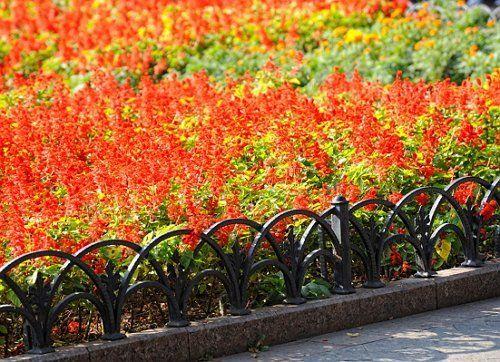 Красный цветник