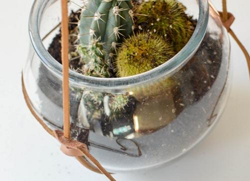 Аквариум с кактусами в подвеске из кожаных шнуров