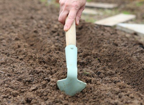 Посев семян редиса