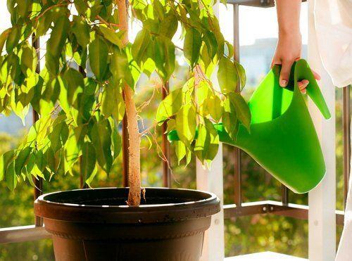 Полив растений на балконе